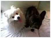 dogs_jan06